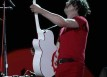 white stripes live